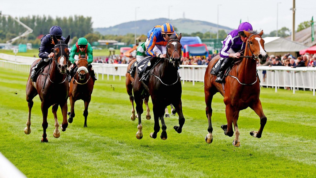 Guineas Double Bid: English Guineas winner Minding will take all the beating on Sunday.