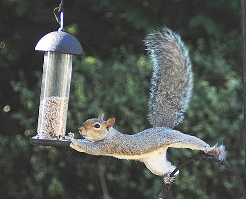 WARNING: Look out for these tricky customers attacking your bird feeder if the snow comes