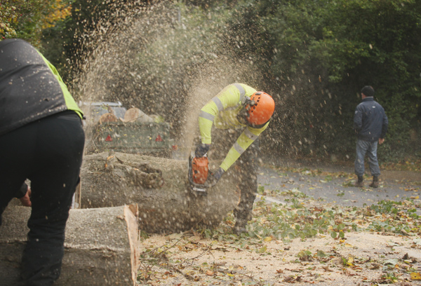 Workers clear Dunmurry Lane after a tree fall on Monday