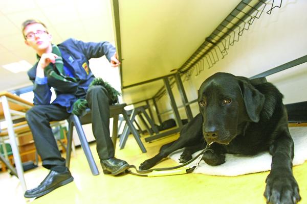 INSEPARABLE: De La Salle Upper Sixth pupil Alexander Keenan with his Labrador Retriever guide dog Dileas