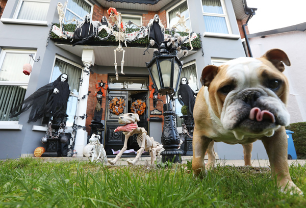 Baxter the bulldog photobombs our photographer as he snaps this Halloween house on the Antrim Road