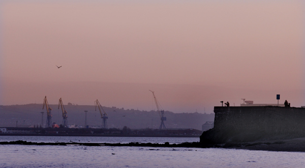 The Belfast Lough tide recedes, the sun sets and birds get ready to roost as a lone photographer keeps an evening vigil